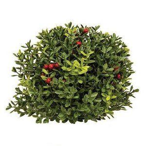 "New England Boxwood With Berries 8"" Half Sphere"